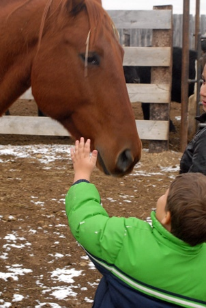 Petting the horse