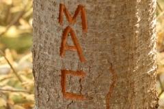 Mac's tree