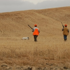 Matt's Montana Bird Hunt